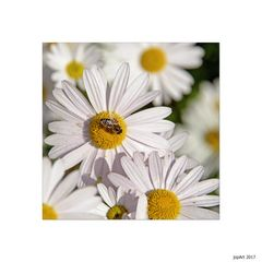 Bienäres...