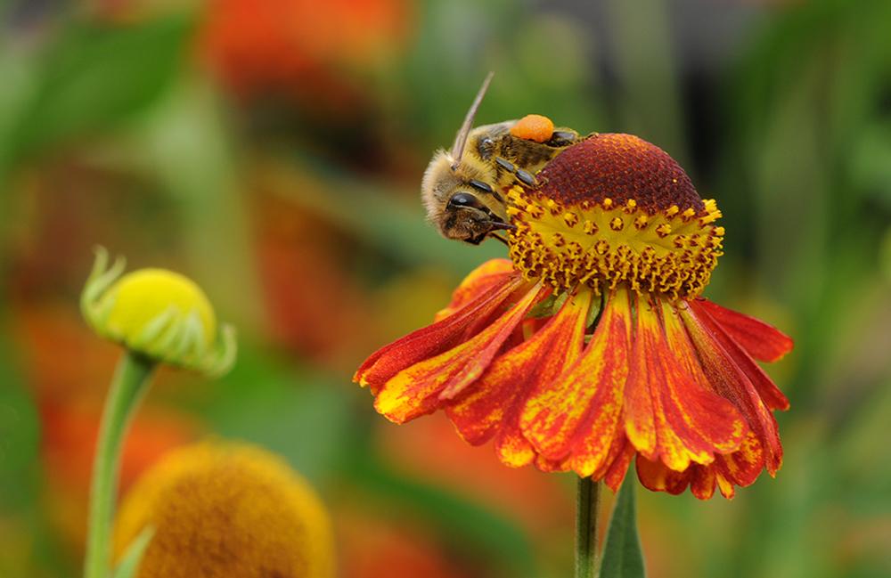 Bienchen fleißig