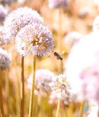 Bienchen mit Blümchen (ich weis ist ein doofer name) ;)
