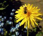 Bienchen und Blümchen