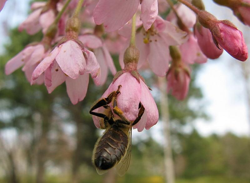 Bienchen und Blümchen die x-te...