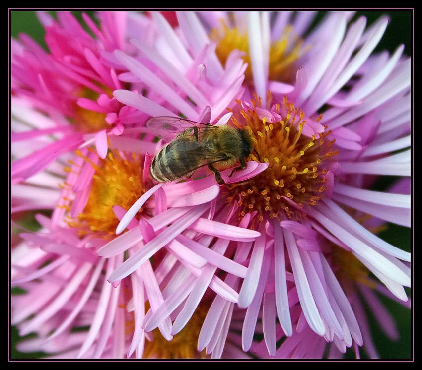 Bienchen und Blümchen reload