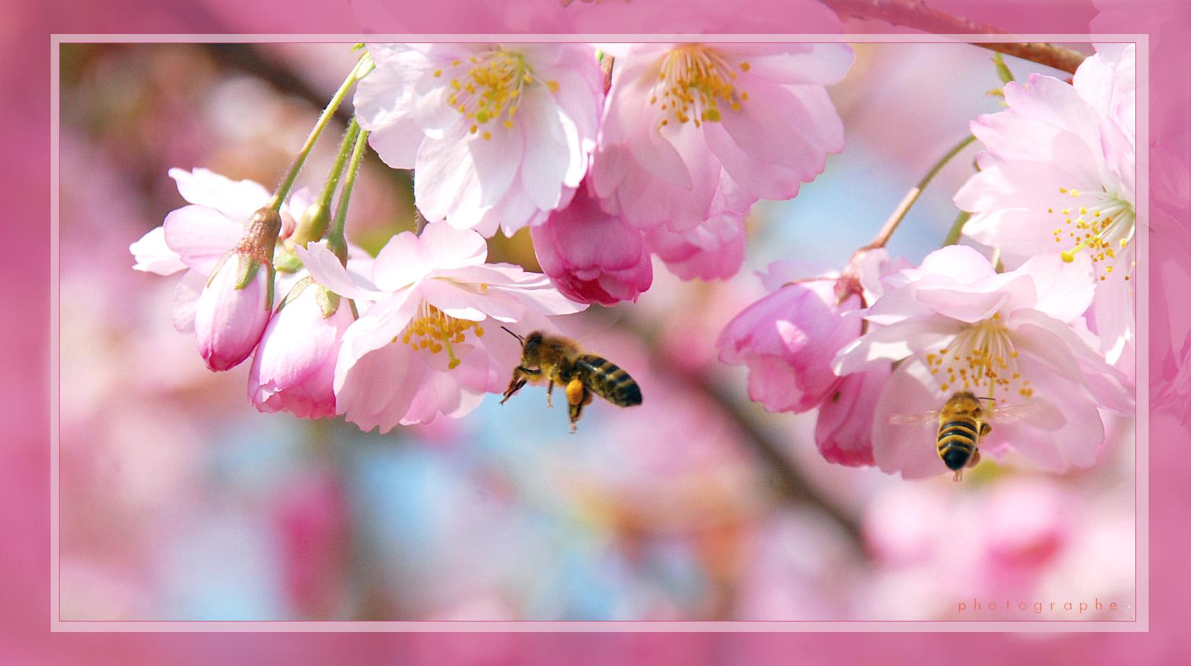 Bienchen und Blüten ...