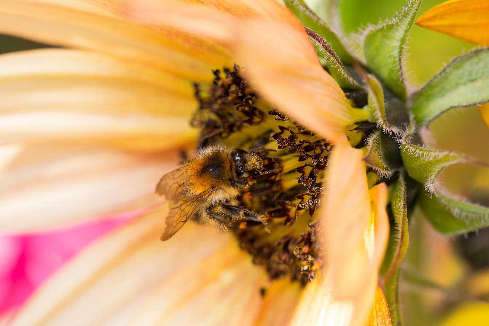 Biene am Arbeitsplatz