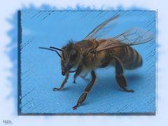 Biene auf dem Terassentisch 1