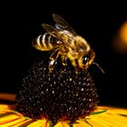 Biene auf Sonnenauge