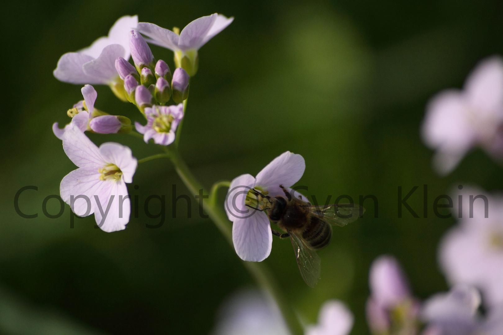 Biene bei Ihrer täglichen Arbeit