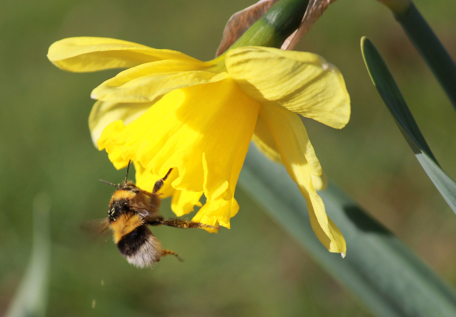 Biene & Blume