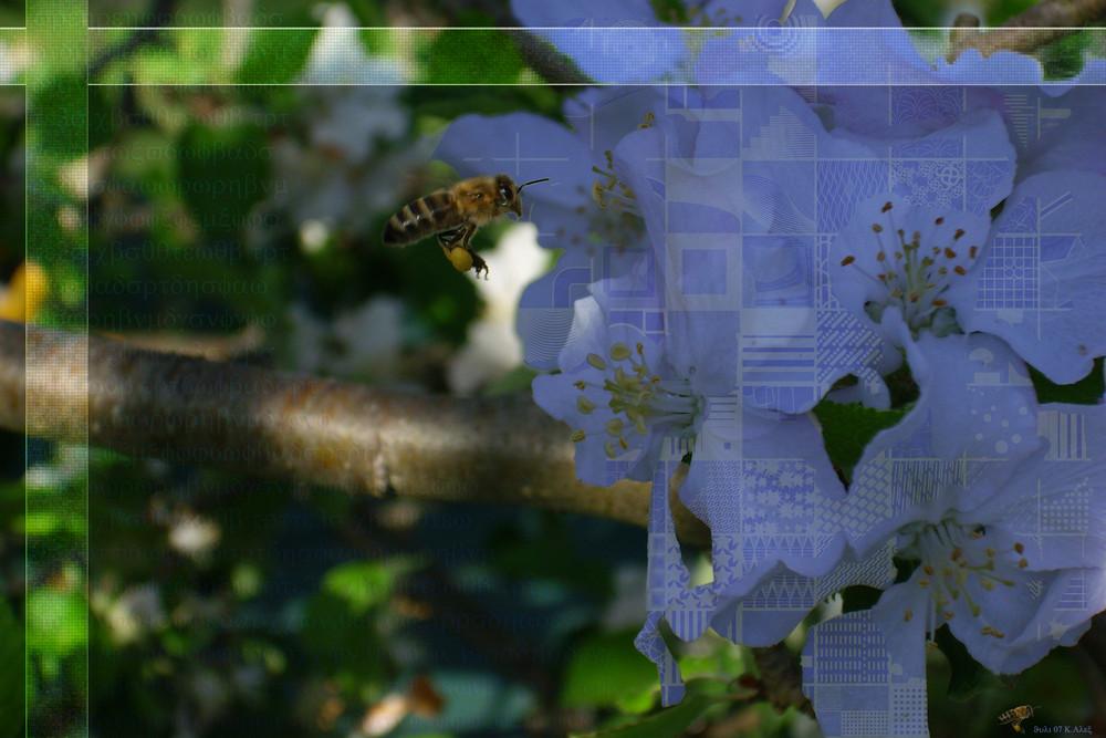 Biene im Flug