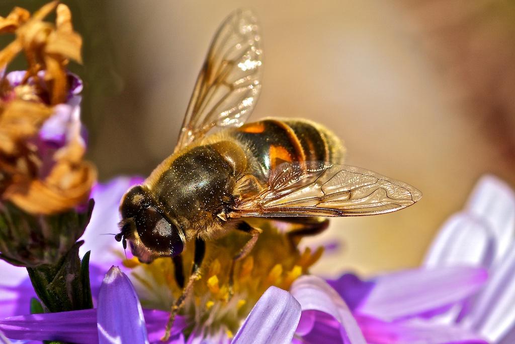 Biene im Herbst