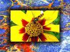 Biene im Rahmen