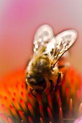 Biene in Reich der Farben