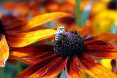 Biene Maja im Glück