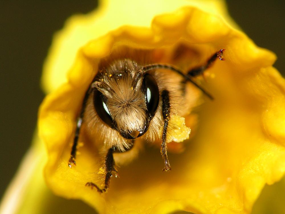 Biene Maja Nach Ihrem Winterschlaf Foto Bild Tiere Wildlife
