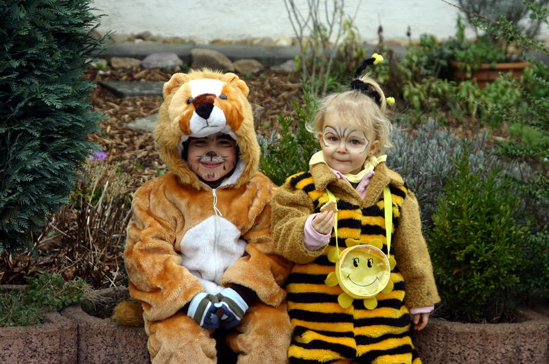 Biene Maja und ein Löwe sind dicke Freunde!