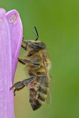 Biene noch nicht sehr fleißig ;-)
