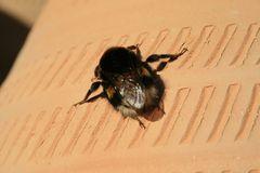 Biene oder ähnliches