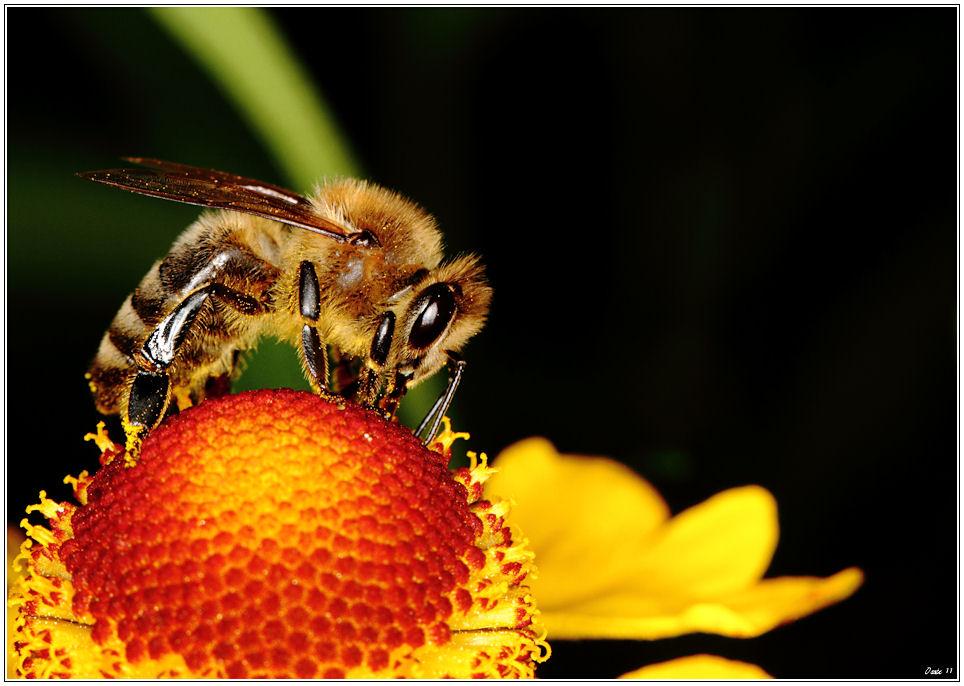 Biene so fleißig