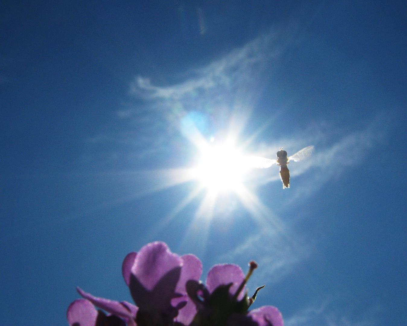 biene sonne und blume foto  bild  pflanzen pilze