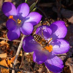 Biene von oben