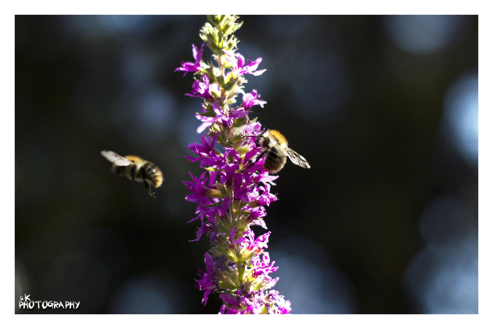 ..Bienen..