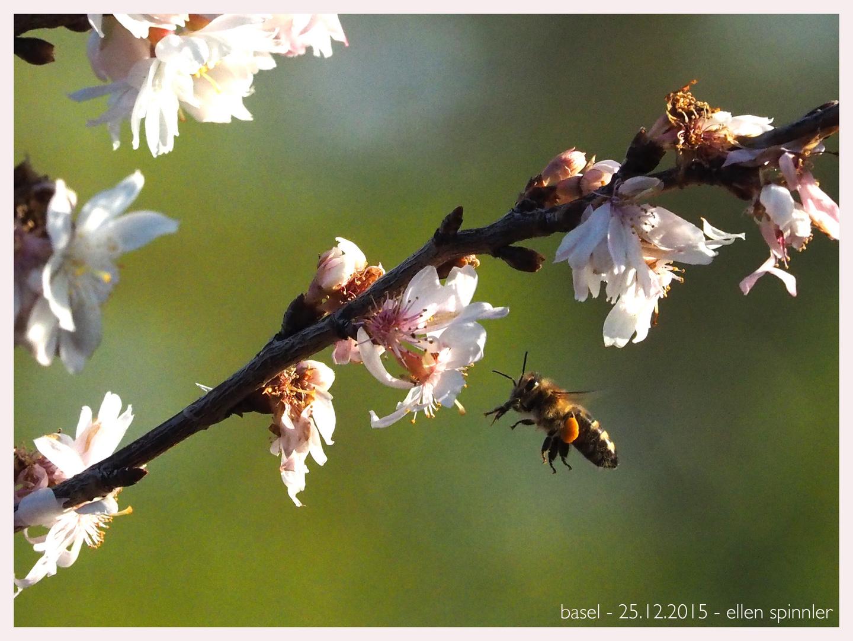 Bienen an Weihnachten!