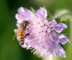 Bienen Arbeit