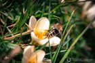 Bienen & Blüten