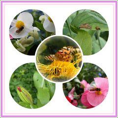 Bienen... Distelfalter.. Käfer... und...?...