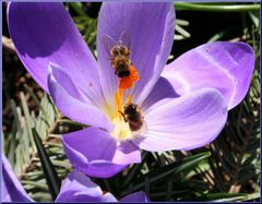 Bienen fliegen wieder