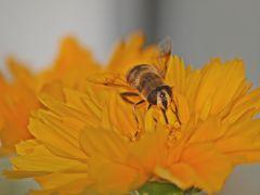 Bienen haben hunger