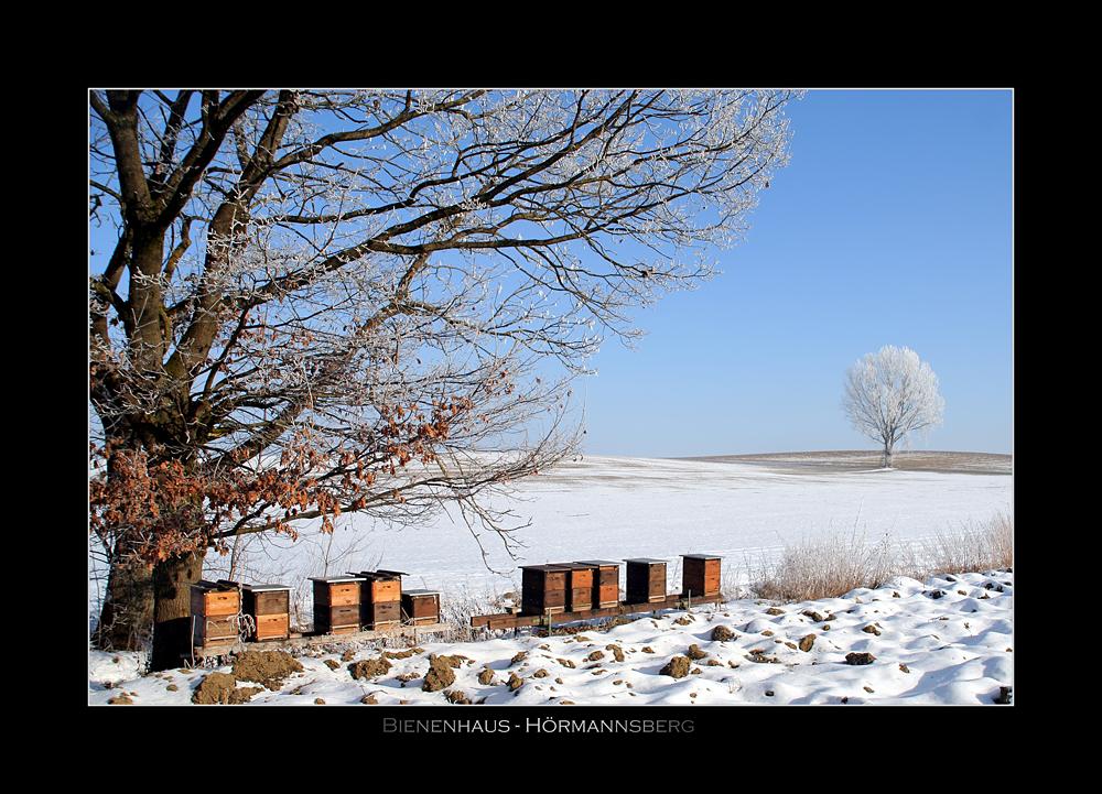 Bienen Im Winterschlaf Foto Bild Landschaft Natur Bilder Auf