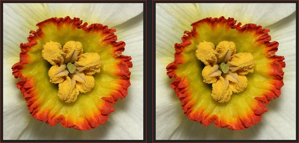 Bienen-Obstschale [3D]