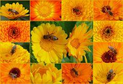 """""""Bienen-Ringelblumen-Collage"""""""