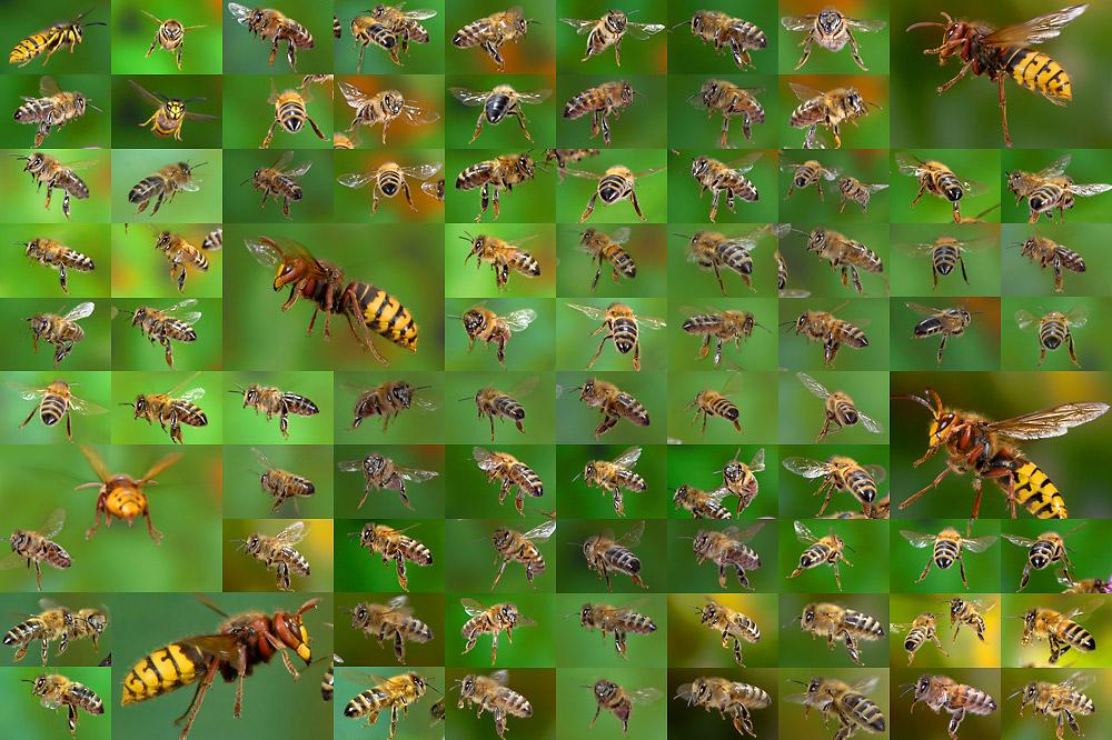 Wespen Bienen Hornissen
