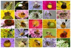 Bienencollage 2
