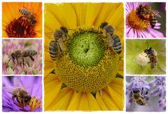 Bienencollage