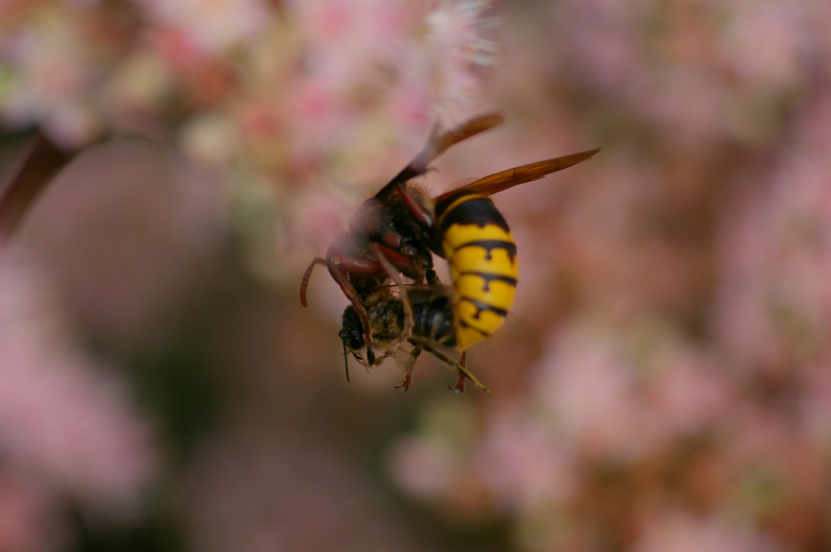 Bienenfang