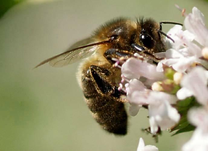 Bienenfleiss -2