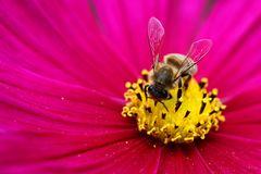 Bienenfleiß (2)