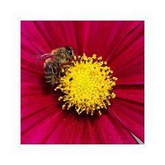 Bienenfleiß (3)
