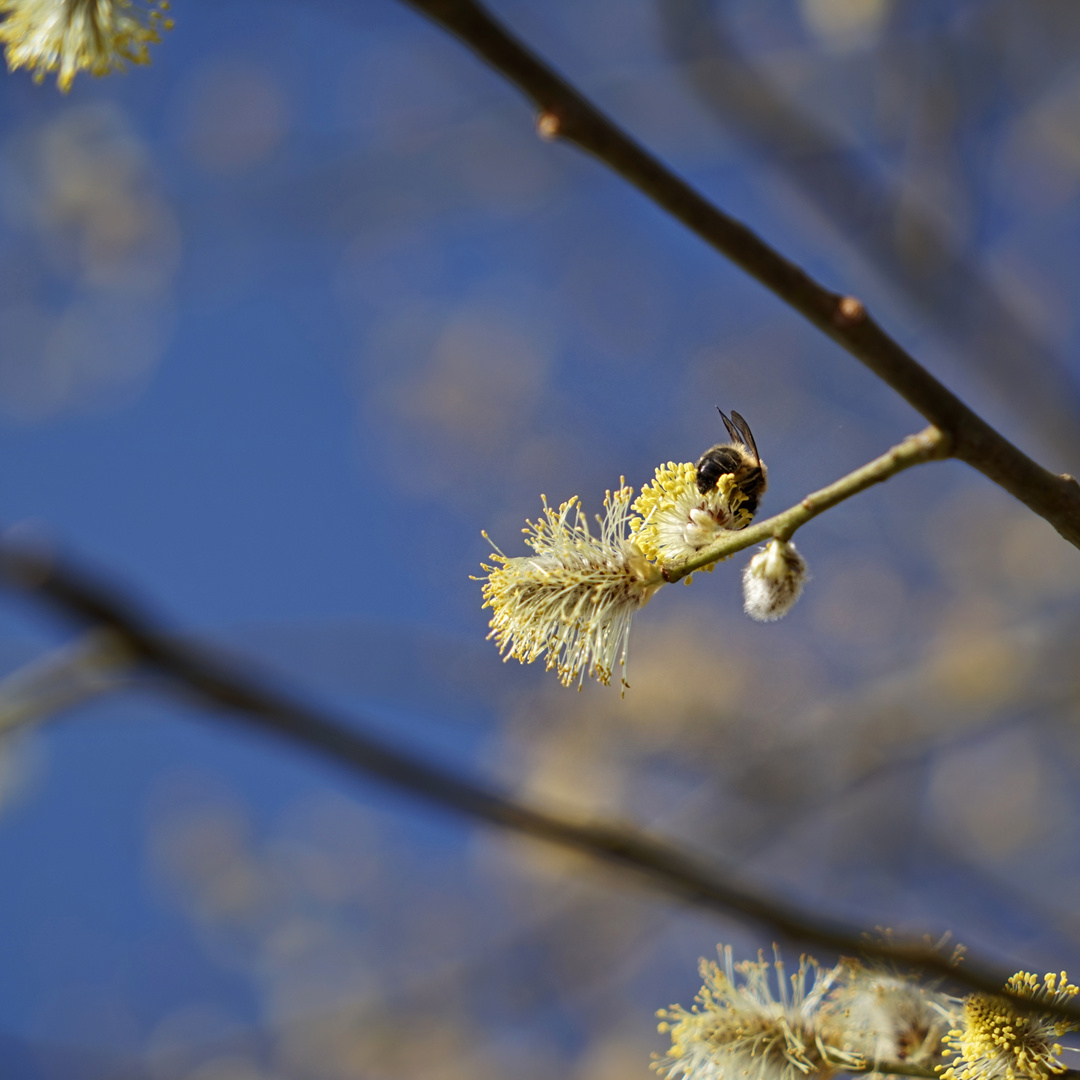 Bienen+Fleiss+Arbeit