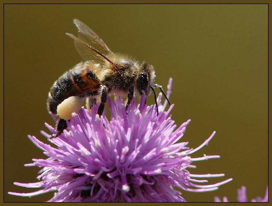 Bienenfleißig
