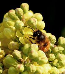 Bienenfleißig bei der Arbeit