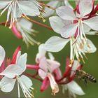 Bienenfleißig in den Sommer