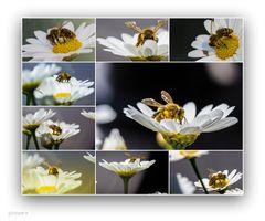Bienenfleißig.. und so geht´s in die nächste Arbeitswoche......#15.2458#08/50