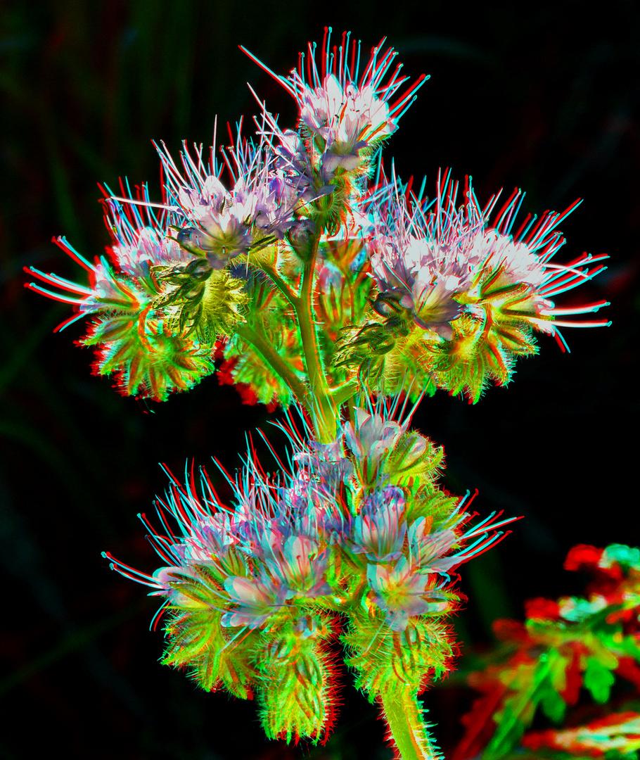 Bienenfreund (3D-Foto)