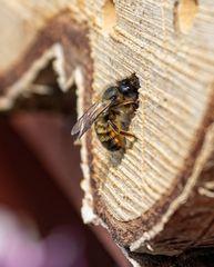 Bienenhotel
