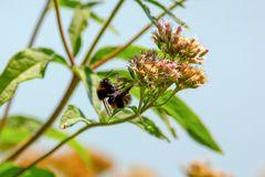 Bienen/Hummeln und Blüten - eine bedeutsame Symbiose