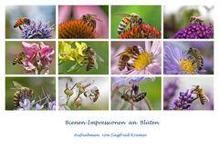 Bienenimpressionen an Blüten